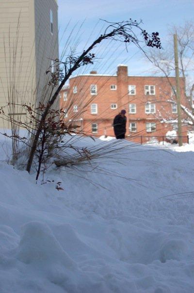 AlmeniaJ Photography (Taken on Snowpocalypse Day 3)